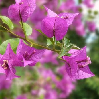Sarasota landscaping