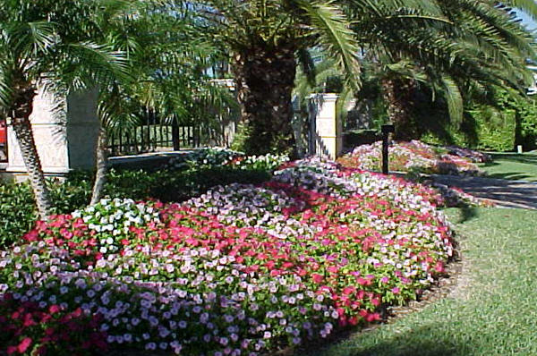 About Us Sarasota Landscapers State Of The Art Landscaping
